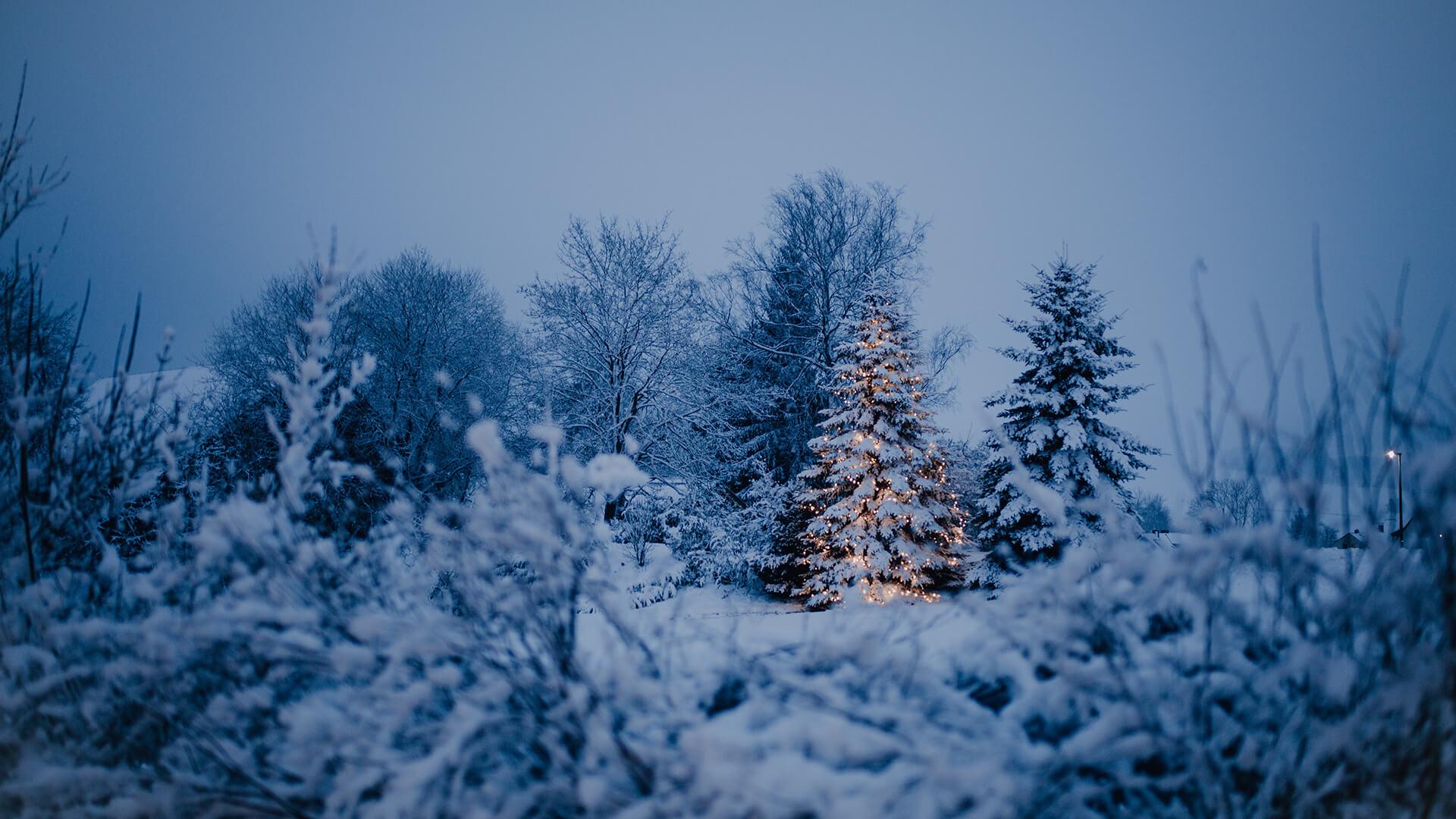 Slide Winter Weihnachtsbaum